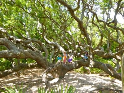 Best Climbing Tree EVER