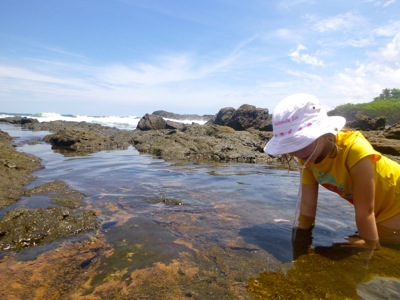 Finding Shells in the Tide Pools