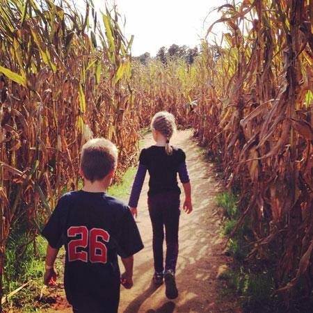 In the Corn Maze