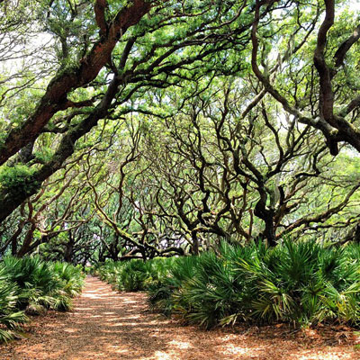 Cumberland Island Trees