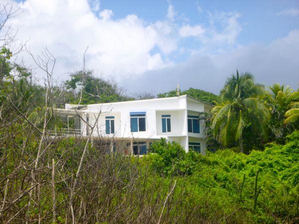 Jungle Office
