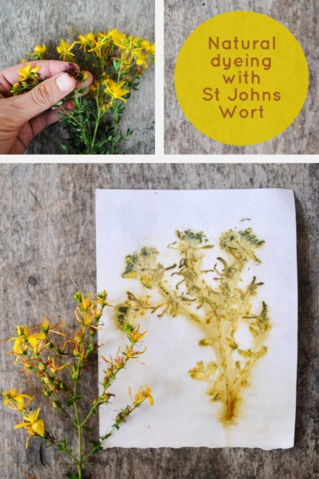 How to eco-print on paper with the natural dyes of St John's Wort