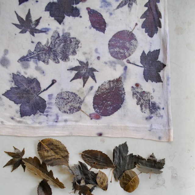 Eco-printing with mixed leaves: maple, oak, blackberry, cotinus