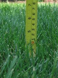 Grass length