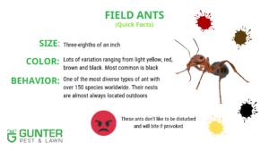 Kansas City Homeowner S Guide To Ants Gunter Pest Lawn Kcmo