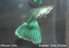 fishpetlovers