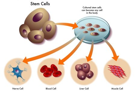 medical illustration of the function of stem cells in the human body