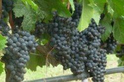 Şarap tadim turlari ve şarap tadımının incelikleri