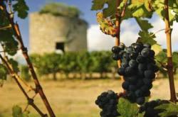 Bordeaux - The Medoc