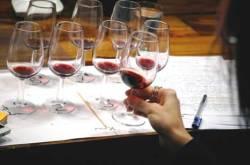 Şans Wine Lounge'da Gusto Şarap Kursları – I. Etap