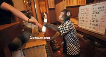 Bu restoranda Japon Izaka Kayabuki'nin evcilleştirdiği maymunlar garsonluk yapıyor.