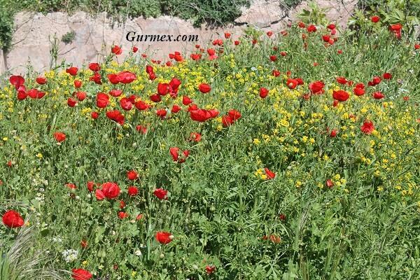Bozcaada Kalesi çiçekler