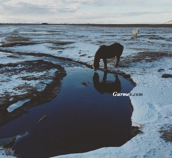 İzlanda kuzey ışıkları ne zaman gidilir