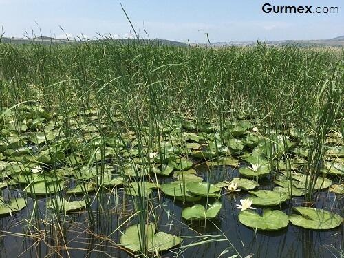 Karacabey Gezilecek Yerler, Uluabat Gölü kuş cenneti