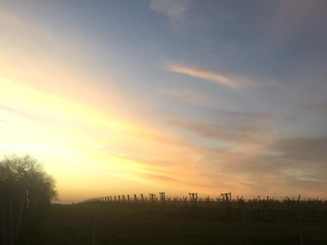 The sun goes down over vineyards in Carmelo, Uruguay