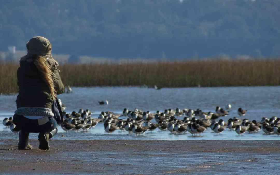 Birdwatching Tour in Punta del Este