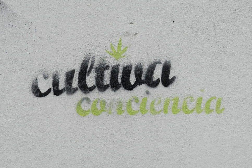 comprar marihuana uruguay