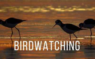 Birdwatching Tour in Punta del Este