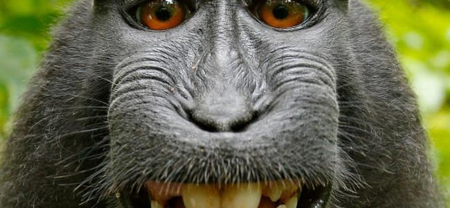 selfie-wikipedia-mono