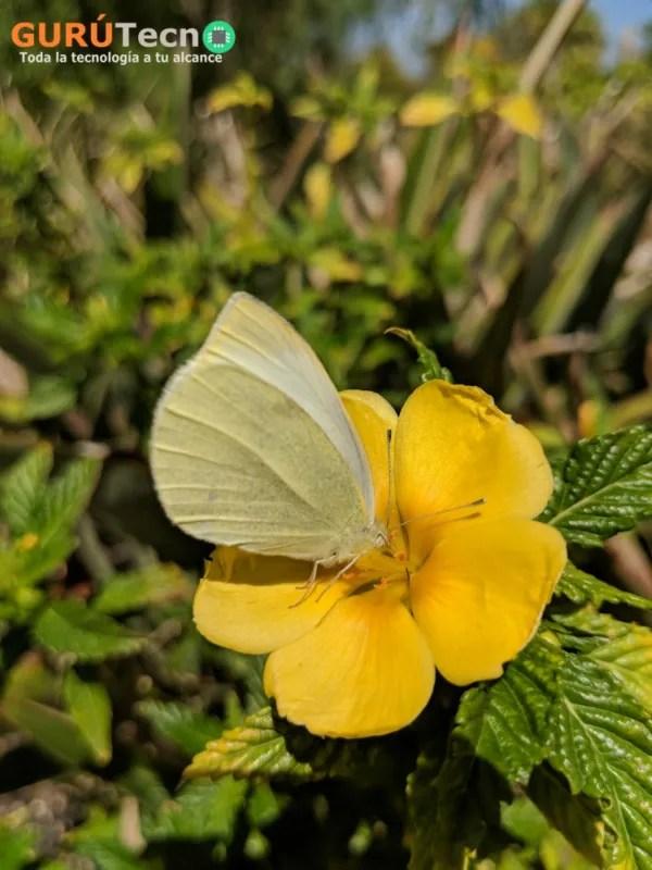 google-pixel-2-mariposa