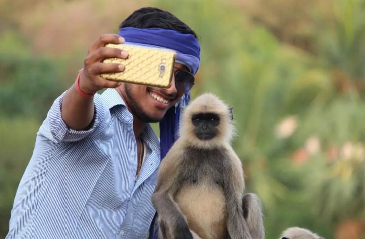 selfie-monkey-pixabay
