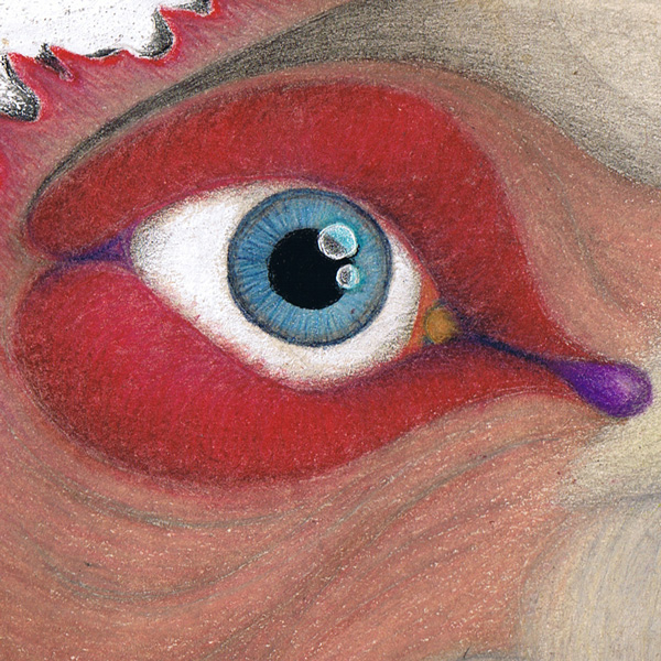 Dibujo: Gran Condor Sagrado con pájaro lenguado (detalle 1)| por Gustavo Adolfo Díaz G.