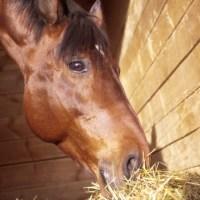 Alimentos que los caballos no deben comer
