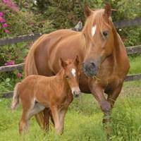 Cría y reproducción de caballos