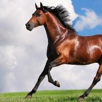 Cómo mantener el caballo en forma