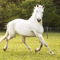 Alergia en los caballos