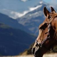 El caballo en la filosofía y tradición turca