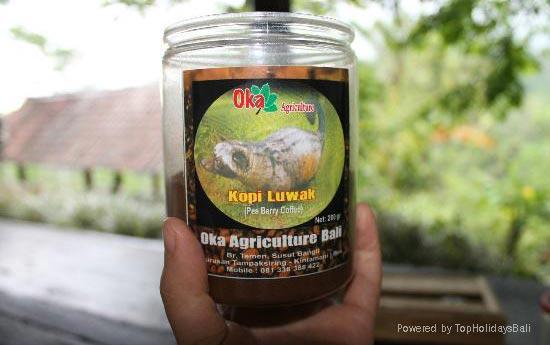 Bali Coffee Luwak 5