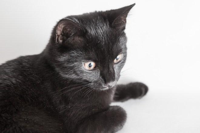 Katze fotografieren