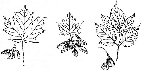 The Talking Trees and Canadian Forest Trees, by James