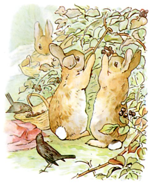 Bunnies picking berries