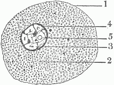 oy8410eceh: diagram of cell