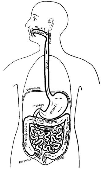 Free coloring pages of digestive system