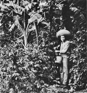 Mexican Coffee Picker, Coatepec District