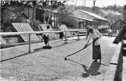 Open-air Drying Grounds on a West Java Estate