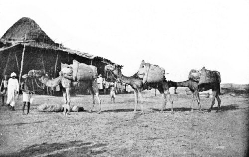 Coffee Camel Train Arriving at the Hodeida Custom-House from the Interior of Yemen