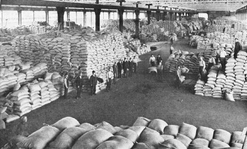 How a Large Cargo of Coffee Is Handled on the Pier As It Is Unloaded From the Ship