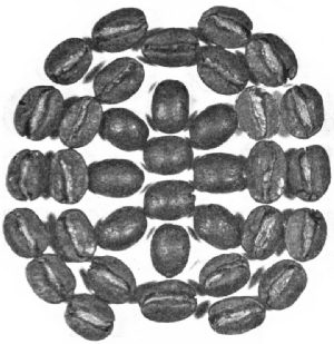 Guatemala Beans—Roasted