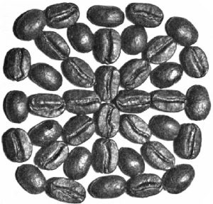 Bogota (Colombia) Beans—Roasted