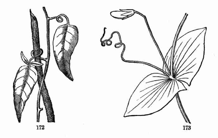 The Project Gutenberg eBook of The Elements of Botany, by