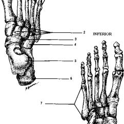 Blank Foot Diagram 480 Single Phase Transformer Wiring Images Of Bone Spacehero Www Pixshark Com