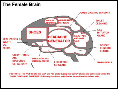 Female Brain - Funny bits