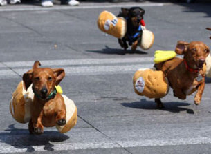 https://i0.wp.com/www.guy-sports.com/fun_pictures/dachshunds_race.jpg