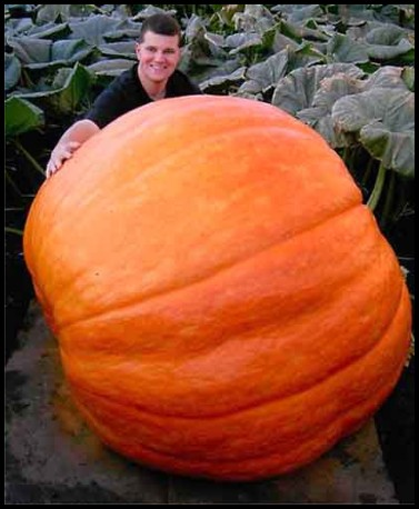 Only 88 days old, giant pumpkin!