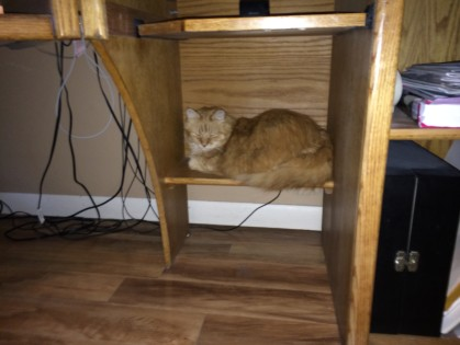 This is where Cinn hides when I clean. She hates the vacuum cleaner.