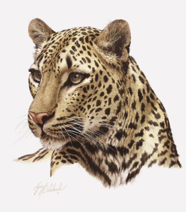 Cat Portraits Guy Coheleach - Coheleach' Animal Art